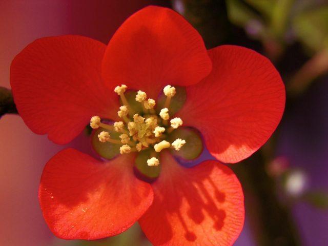Красивый красный цветок желтые цветы из нитей