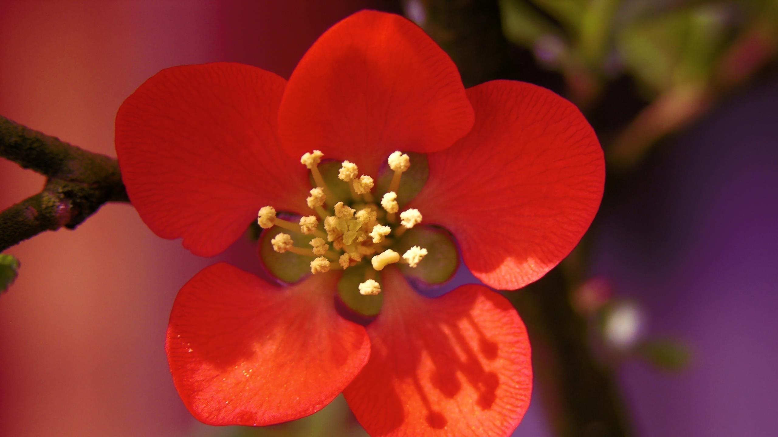 Красивый красный цветок желтые цветы из нитей обои скачать