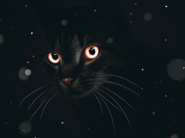 Темный кот