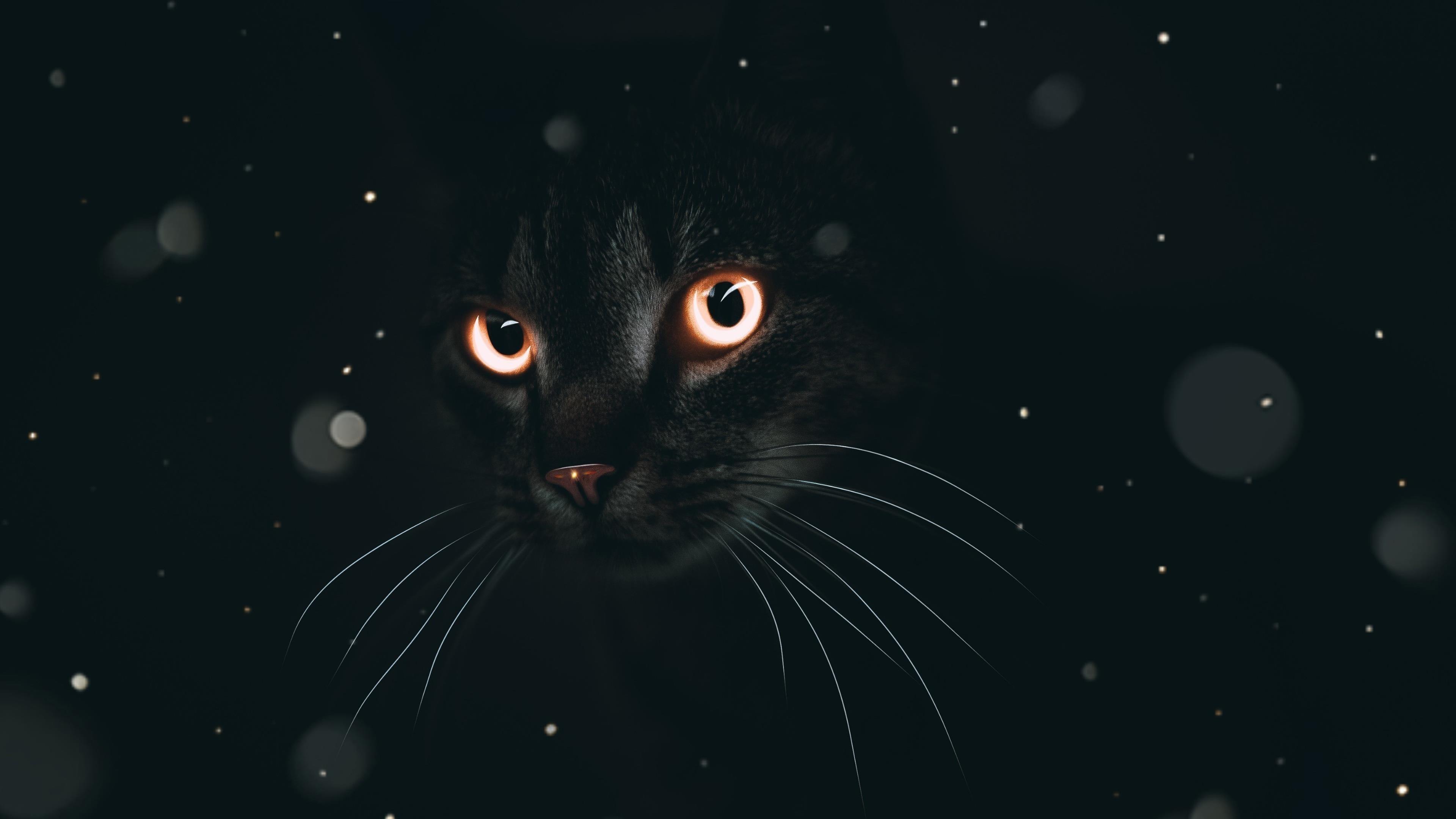 Темный кот обои скачать