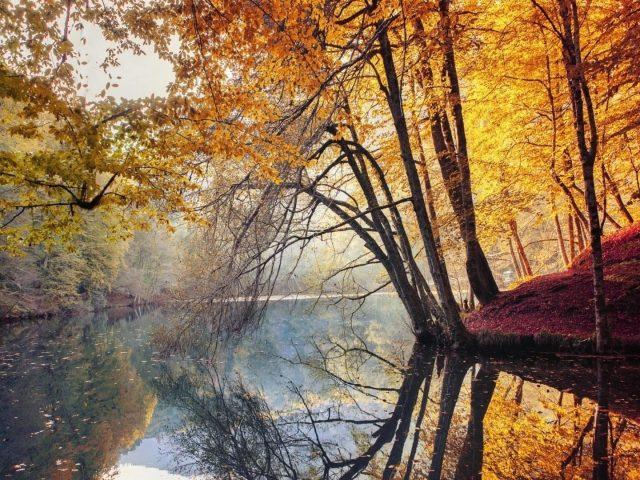 Река между желтыми деревьями и зелеными деревьями покрыла лес с отражением водной природы
