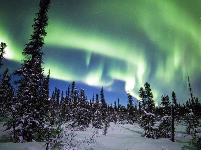 Северное сияние Денали национальный парк лес снег ель зимняя природа