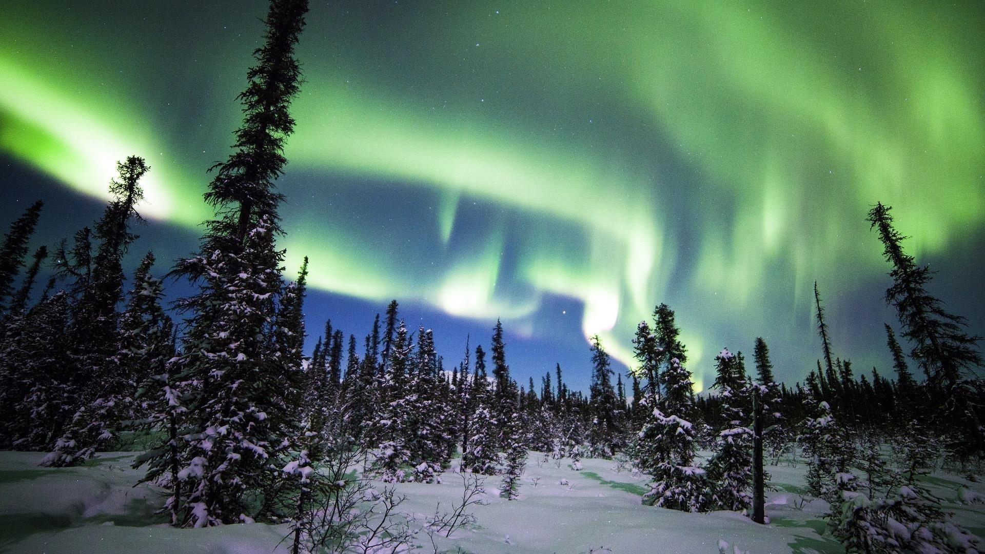 Северное сияние Денали национальный парк лес снег ель зимняя природа обои скачать