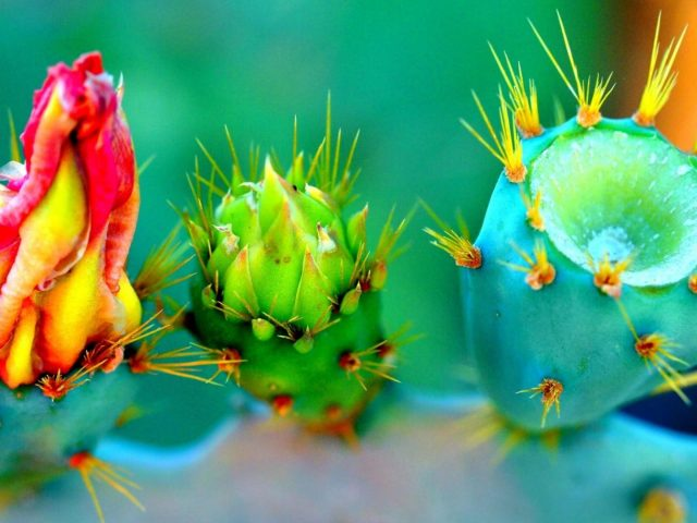 Крупным планом кактус растение природа цветы шипы красочные