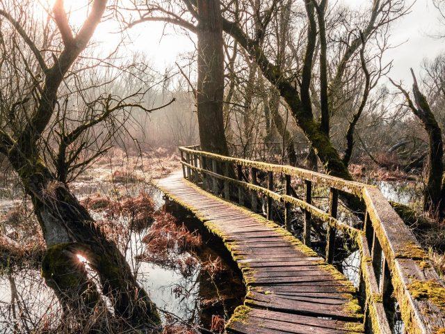 Искусственная дощатая дорожка между сухими деревьями в дневное время природа
