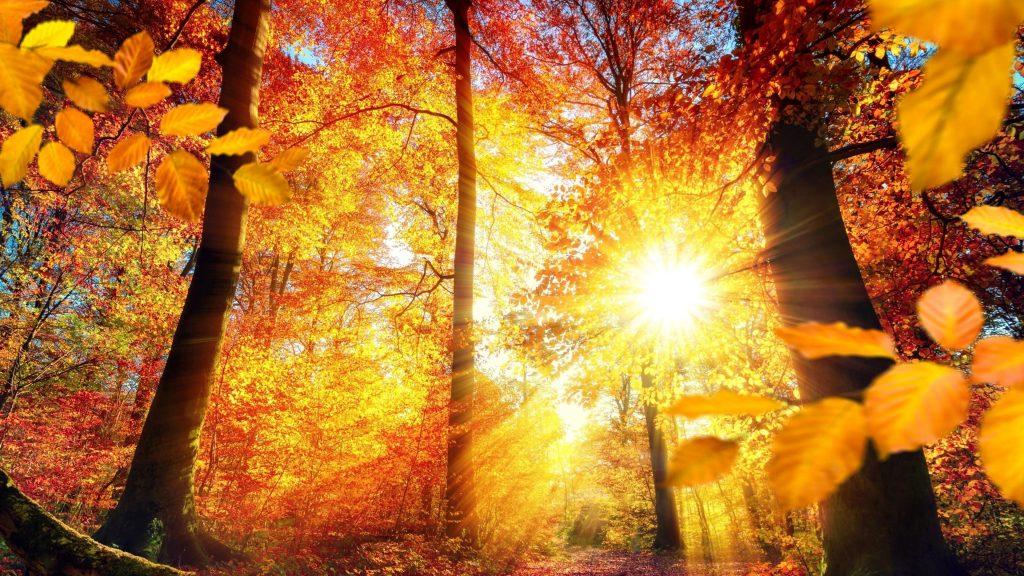 Красно желтые осенние листья деревья с солнечным лучом природа обои скачать