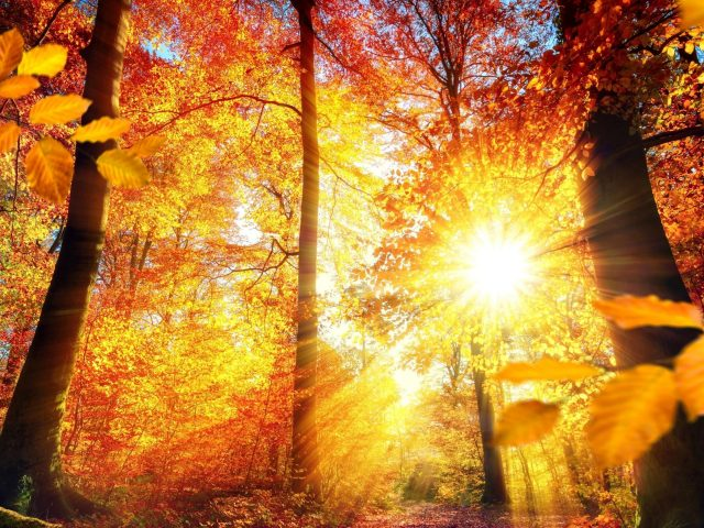 Красно желтые осенние листья деревья с солнечным лучом природа