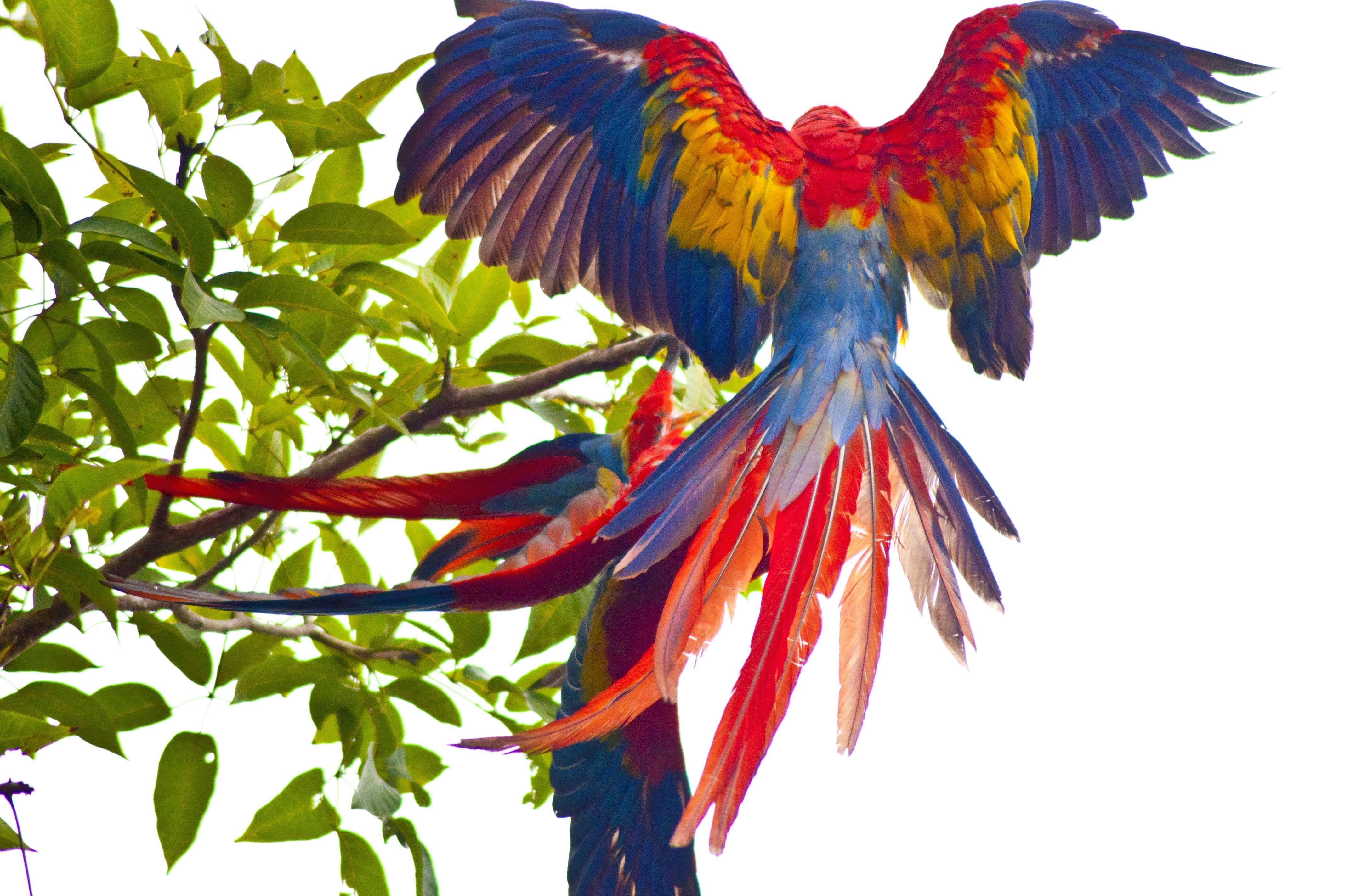 Parrots, trunk, birds, попугаев обои скачать