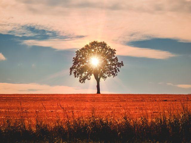 Летний пейзаж дерева