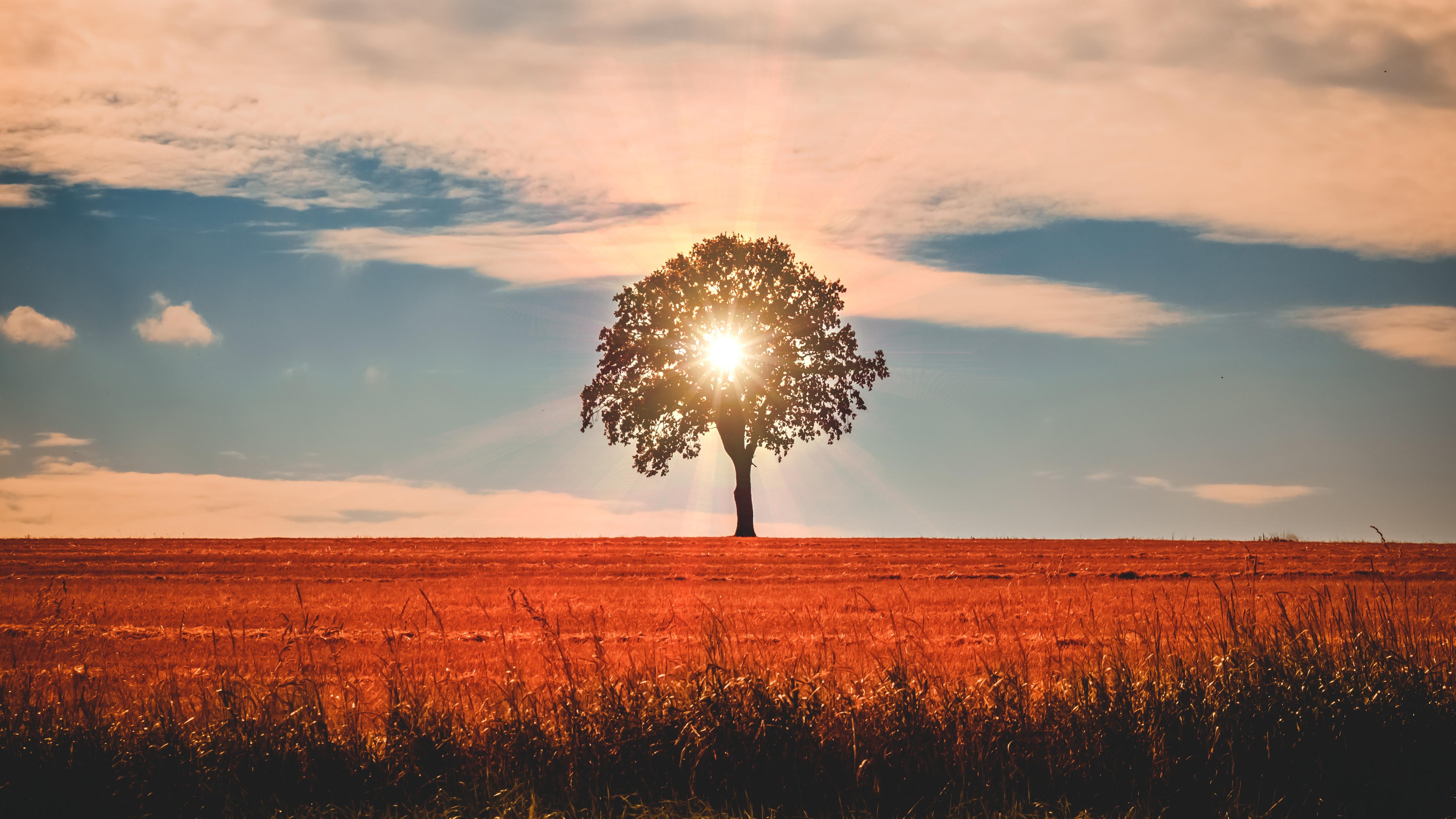 Летний пейзаж дерева обои скачать
