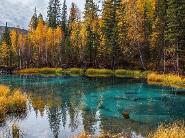 Озеро окружено зелеными деревьями лес с отражением природы