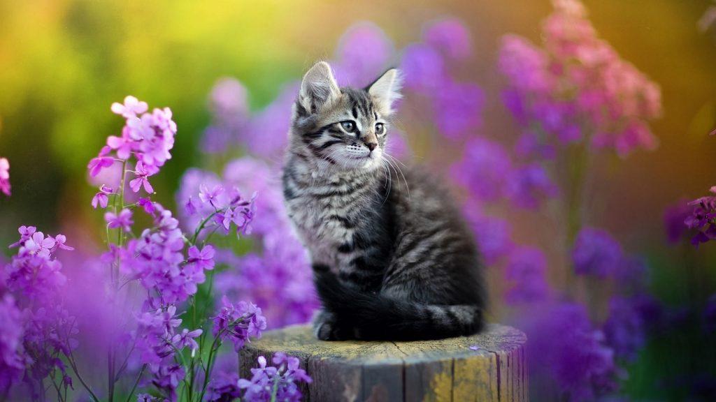 Черный белый кот котенок сидит на стволе дерева в фиолетовых цветах на фоне котенка обои скачать