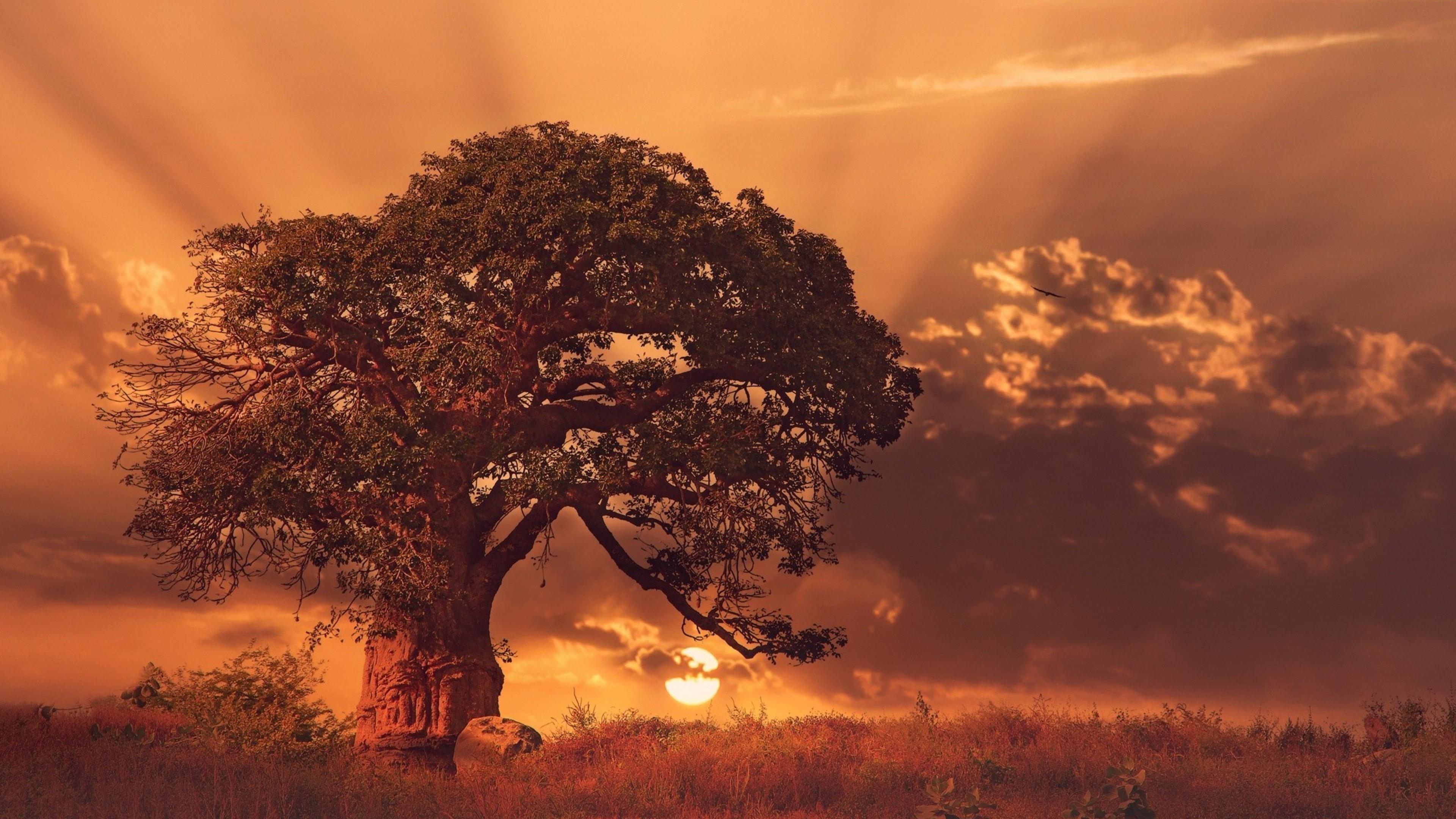 Подмножество деревьев баобаба обои скачать
