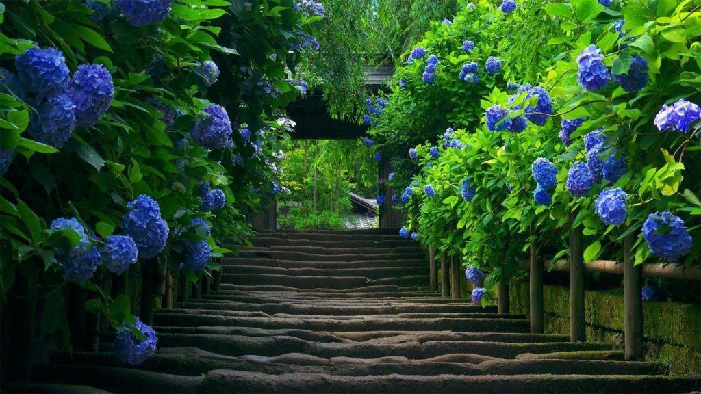 Каменные ступени между синими цветами с листьями деревьев в дневное время природа обои скачать