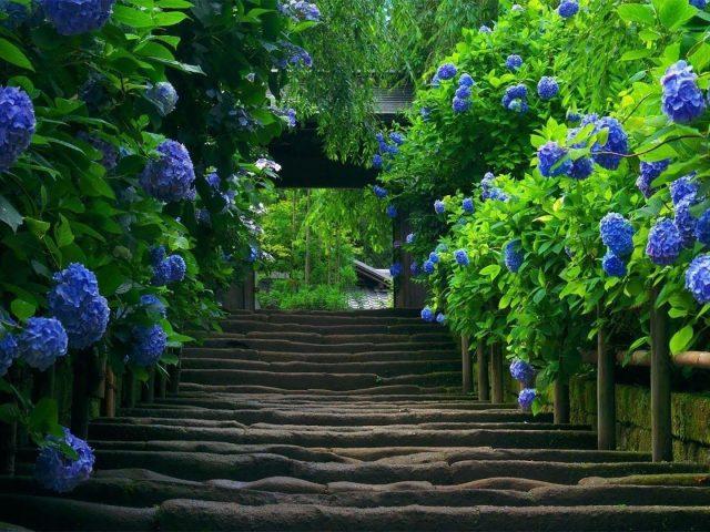 Каменные ступени между синими цветами с листьями деревьев в дневное время природа