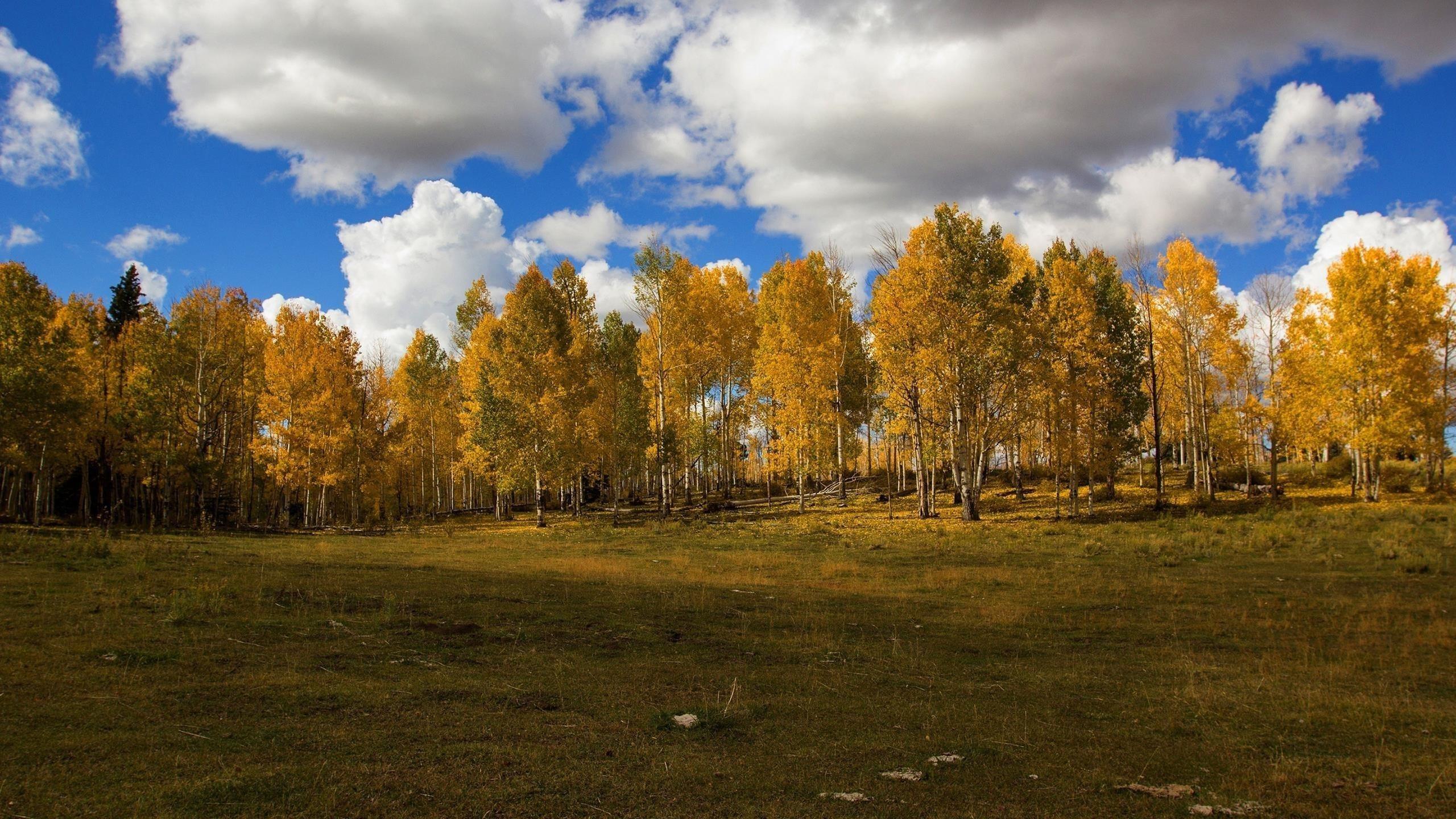 Зеленые поля деревья под белым небом днем обои скачать