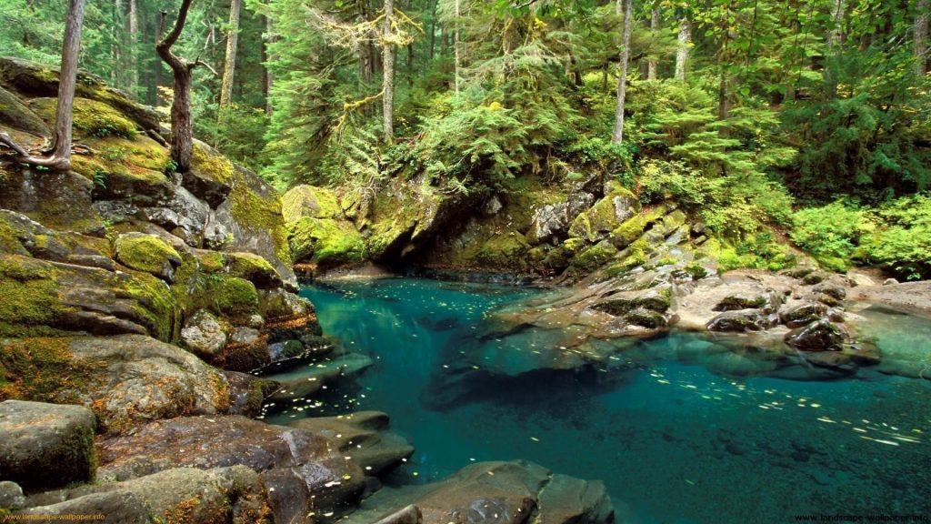 Озеро между покрытыми водорослями скалами в окружении зеленых деревьев в лесной природе обои скачать