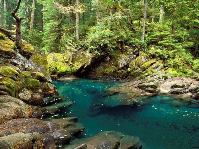 Озеро между покрытыми водорослями скалами в окружении зеленых деревьев в лесной природе