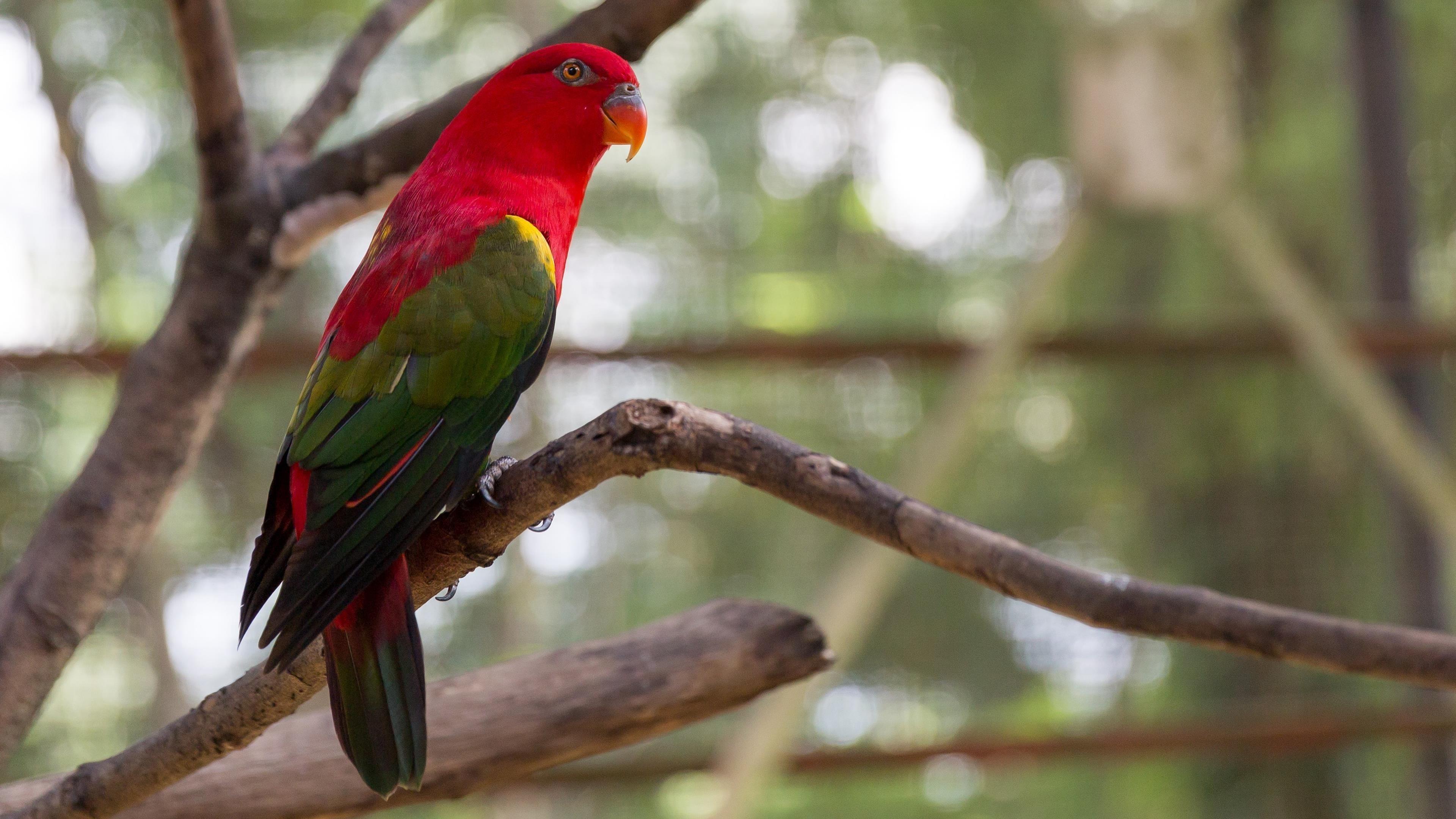 Попугай птица яркая экзотика обои скачать