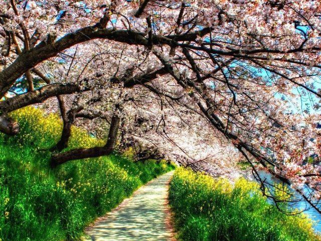 Тропинка между зеленой травой растениями и цветущими розовыми цветами деревьями природой