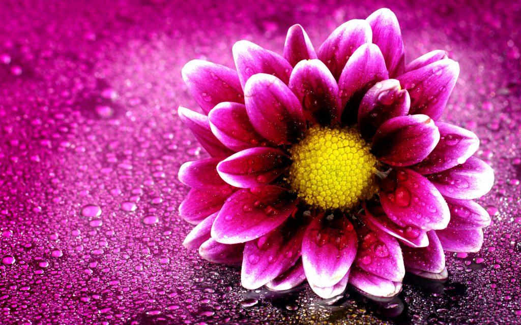 Розовый цветок. обои скачать