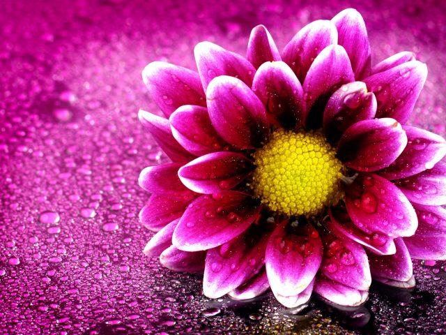 Розовый цветок.
