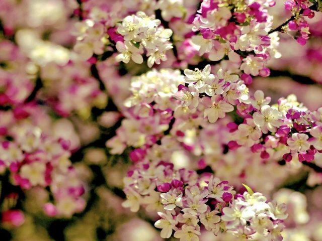 Белый розовый цветок цветы ветви цветы