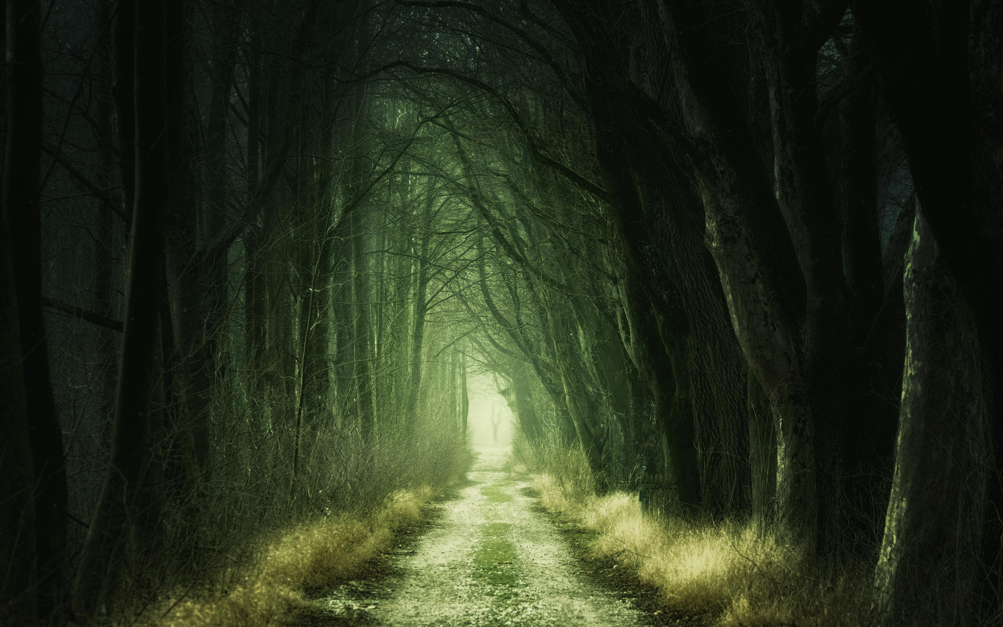Лесной проезд обои скачать
