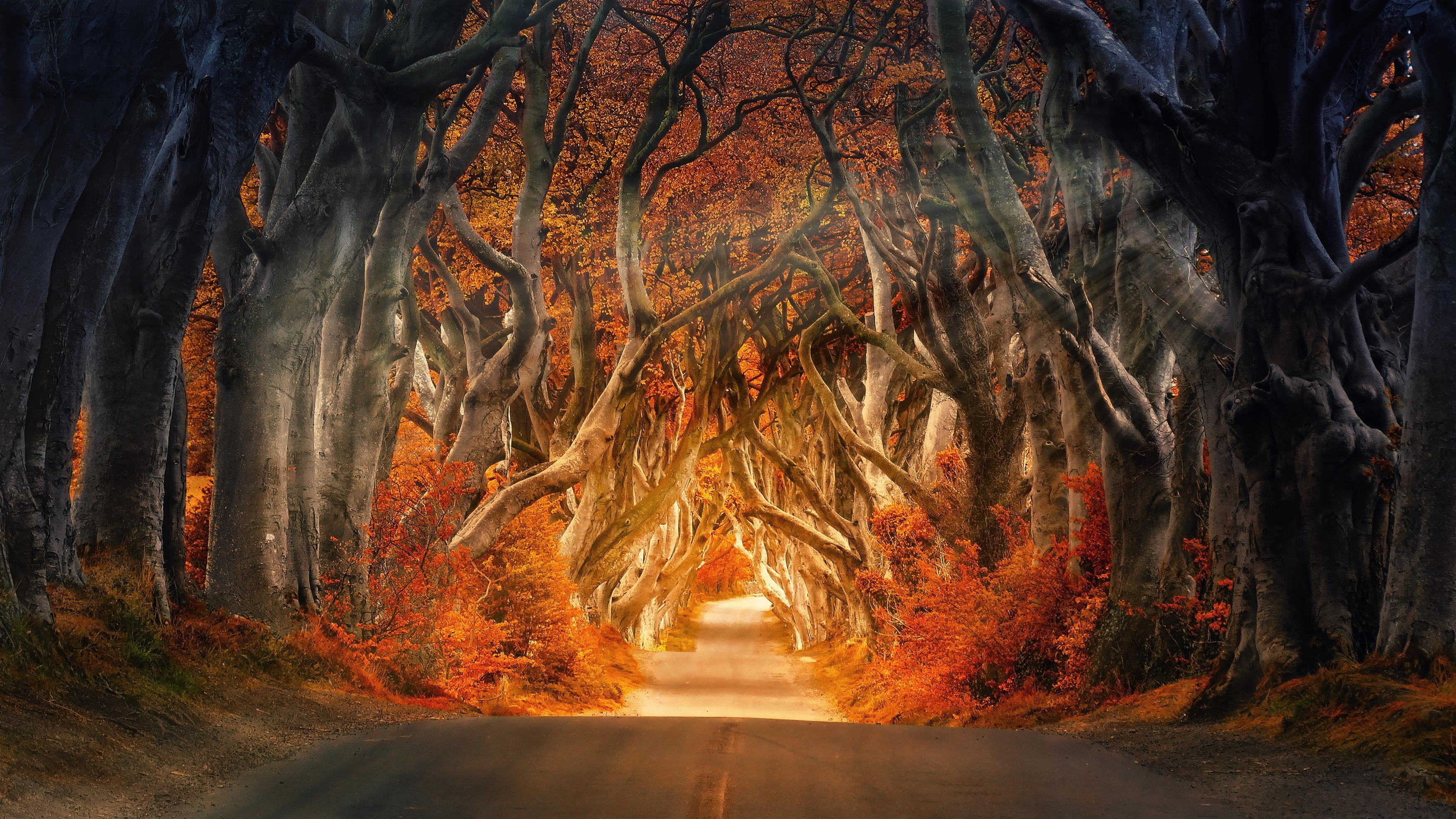 Осенняя лесная дорога обои скачать