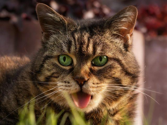 Животные кошки животные