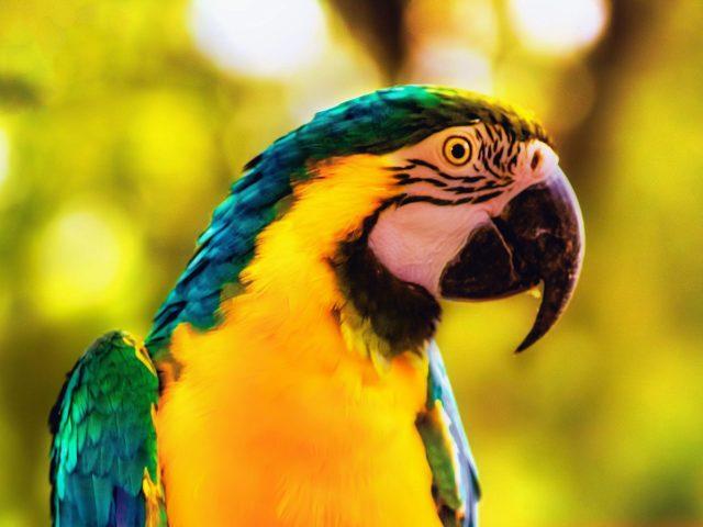 Ара попугай птица яркая ветка