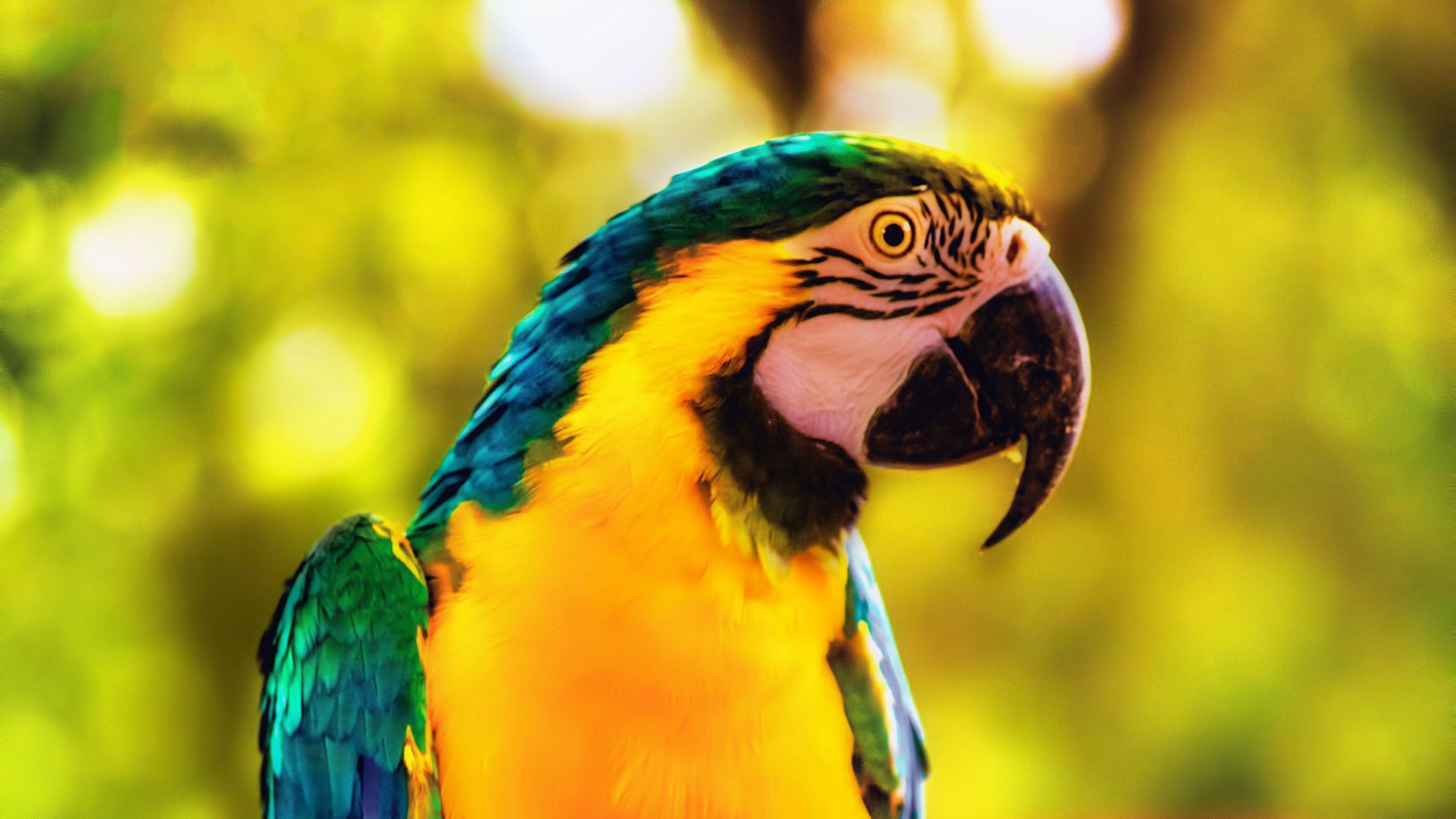 Ара попугай птица яркая ветка обои скачать