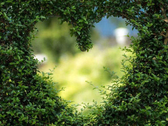 Сердце зеленые листья.