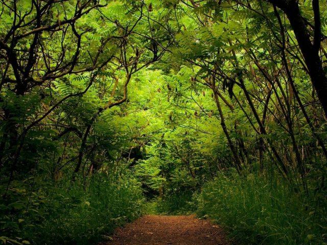 Песчаная дорожка между зелеными растениями кустарниками деревьями фоном леса природа
