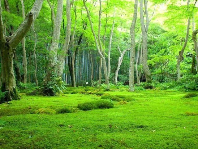 Зелень красивые пейзажи зеленые деревья фон лес природа пейзажи