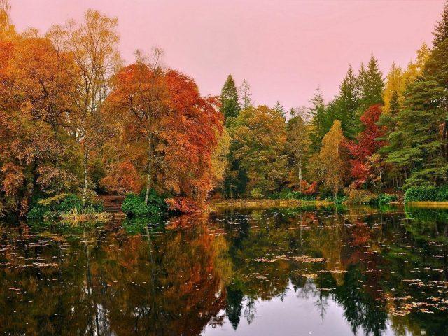 Красивые пейзажи оранжево-зеленые желтые осенние деревья отражение на пруду озеро под розовым небом пейзаж