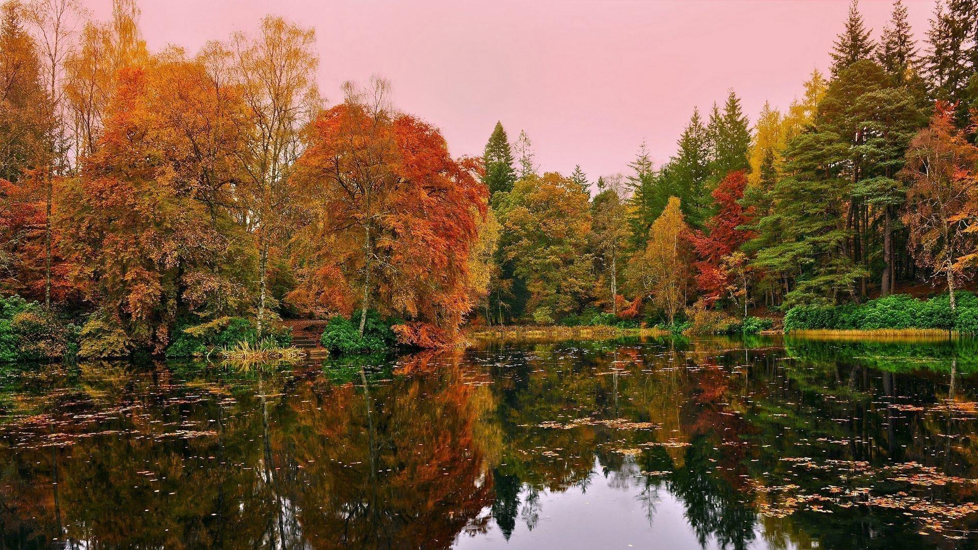 Красивые пейзажи оранжево-зеленые желтые осенние деревья отражение на пруду озеро под розовым небом пейзаж обои скачать
