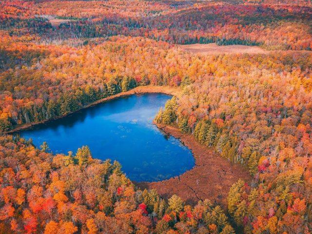 Аэрофотоснимок осеннего леса сердцевидная природа озера