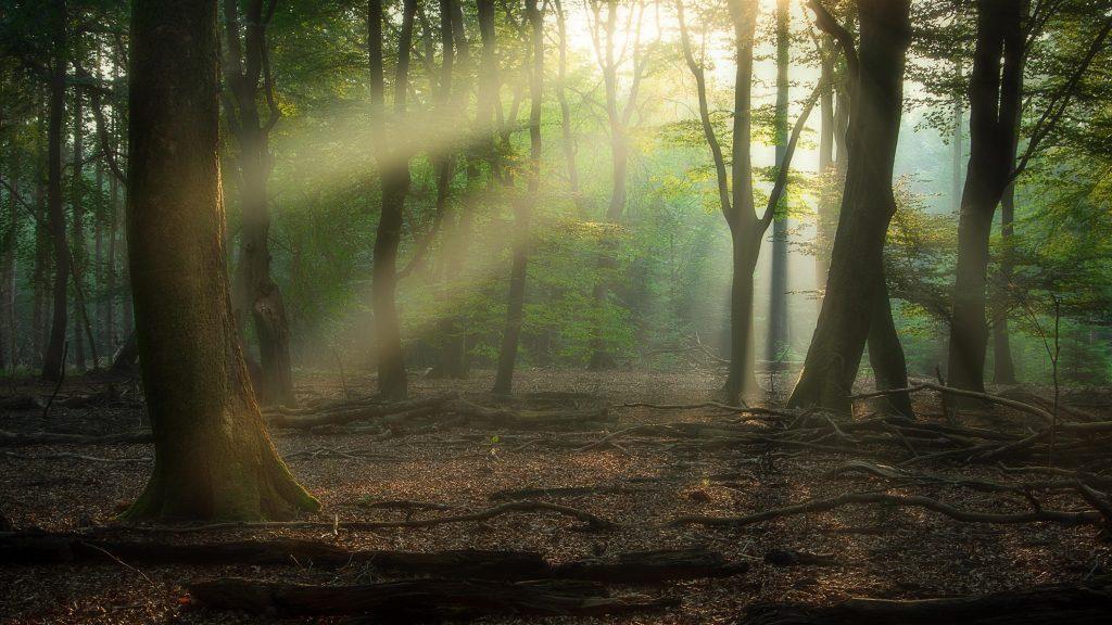 Лес с солнечными лучами природа обои скачать