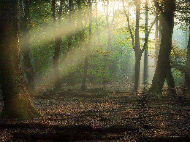 Лес с солнечными лучами природа