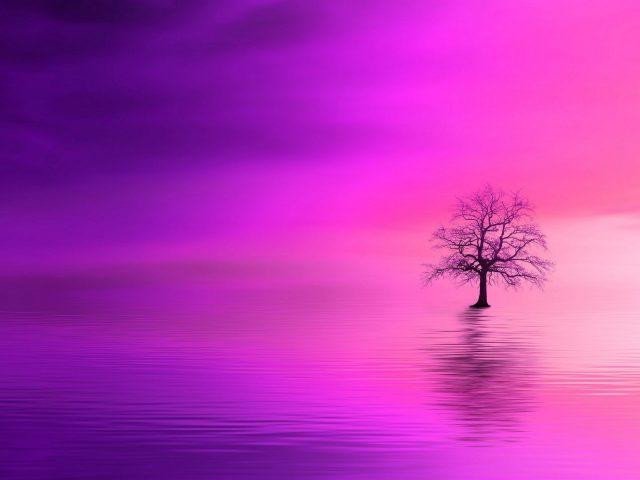 Дерево розовый горизонт одинокий