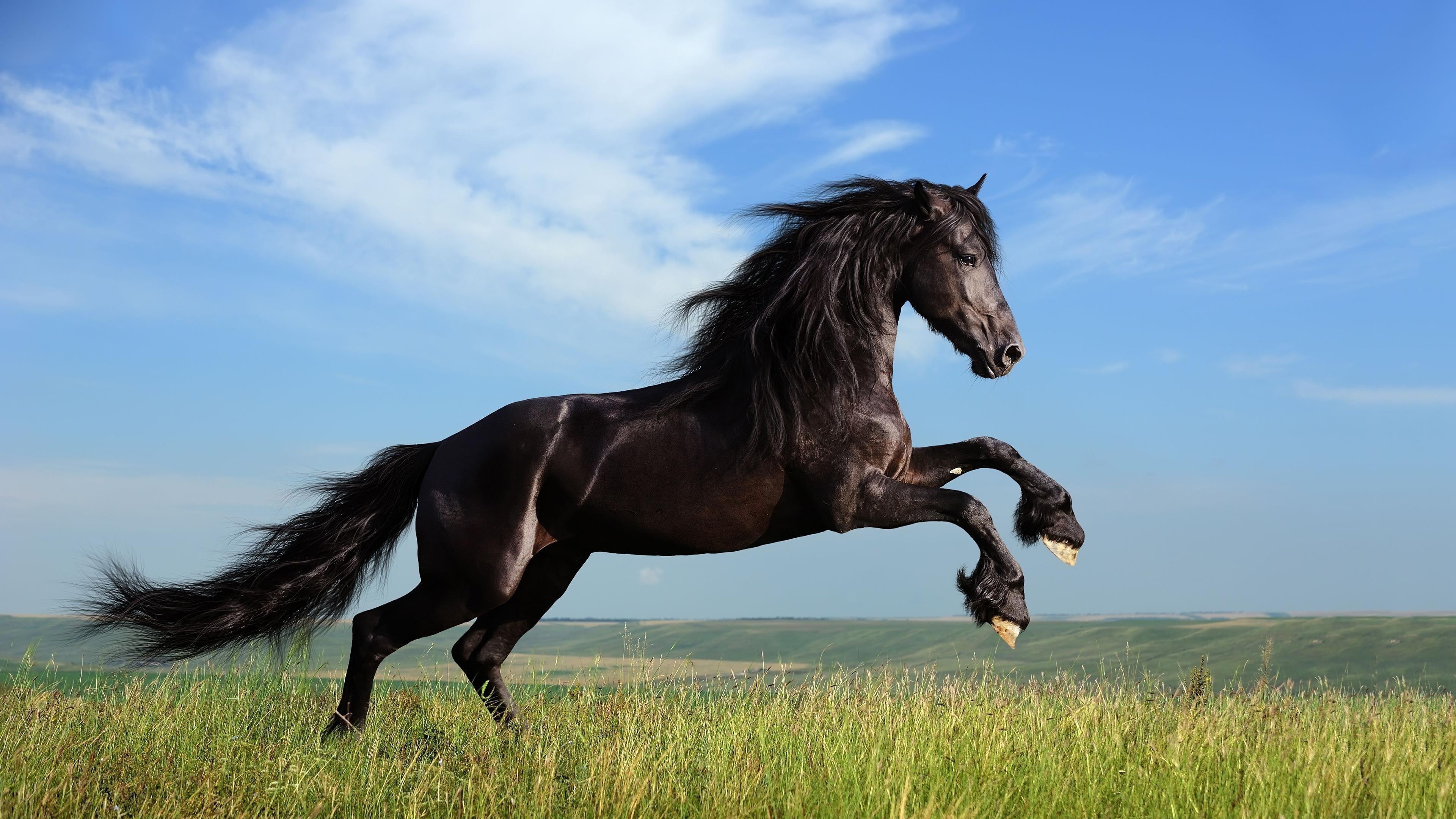 Черный конь обои скачать