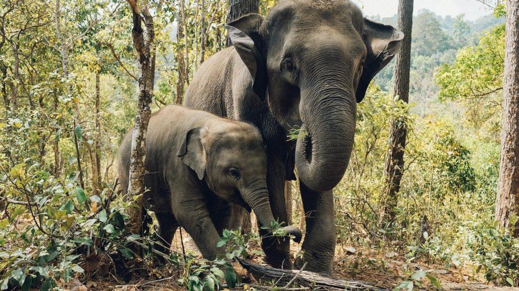 Большие и маленькие слоны стоят на заднем плане леса животные обои скачать