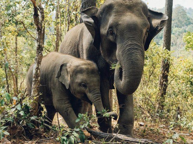 Большие и маленькие слоны стоят на заднем плане леса животные