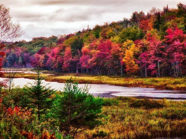 Река между разноцветными деревьями покрыла лес в дневное время под белым облачным небом природа