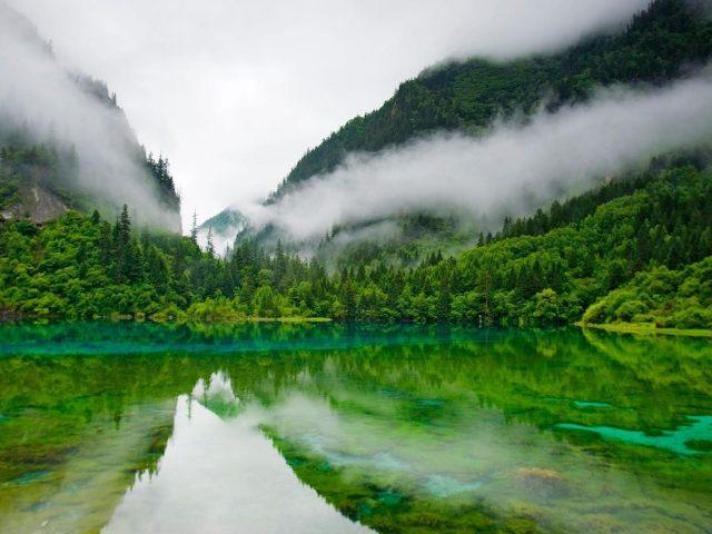 Пейзаж тумана лагуны леса горы с отражением на речной природе