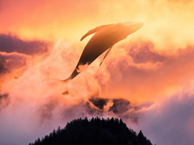 Сюрреалистический закат кита