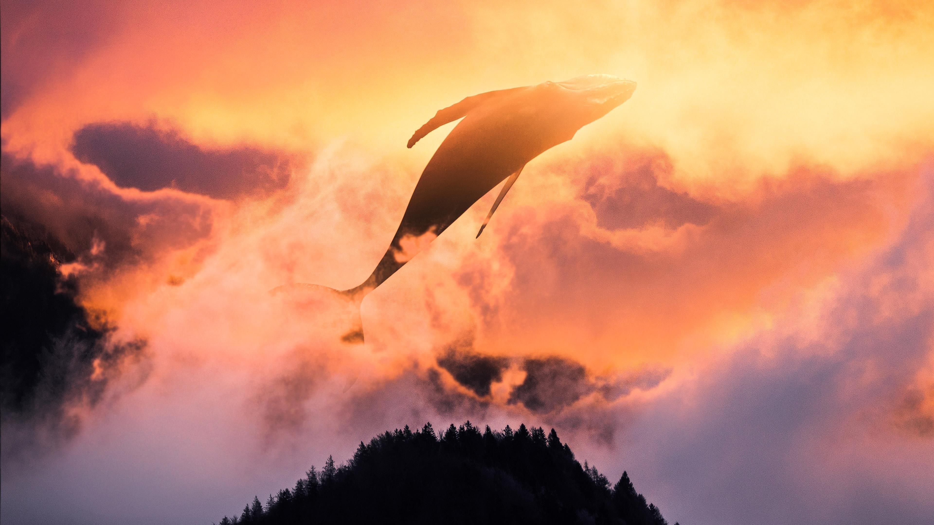 Сюрреалистический закат кита обои скачать