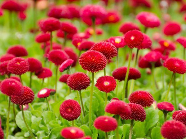 Красные цветы расцветают