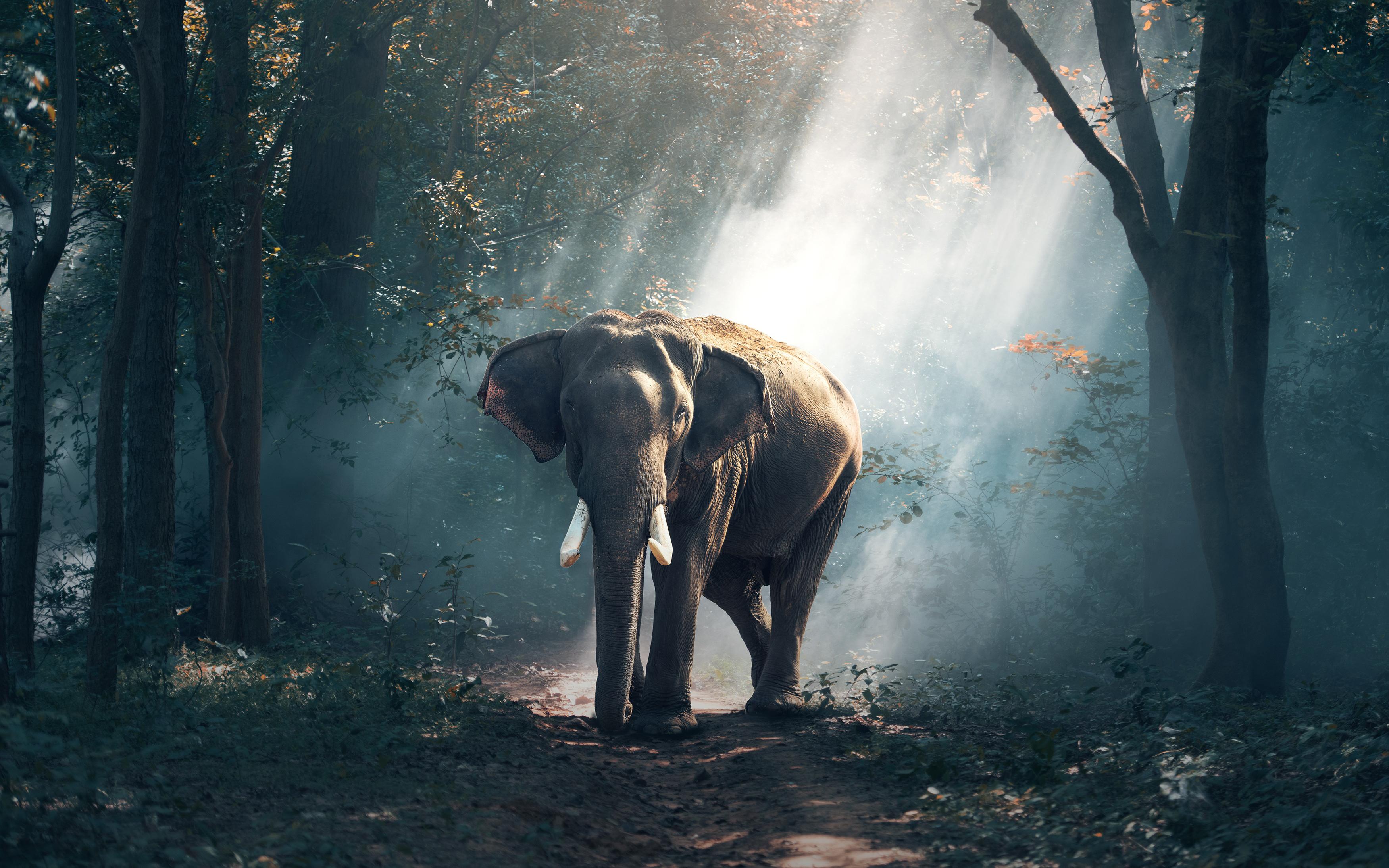 Лесной слон обои скачать